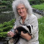 Brian May Named PETA's Person Of The Year For Badger Activism